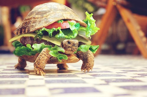 mcturtle
