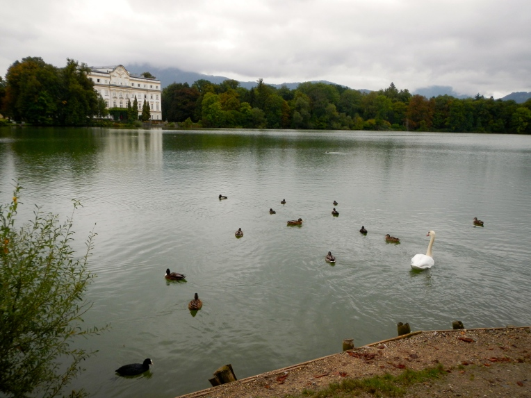 Swans at Schloss Leopoldskron