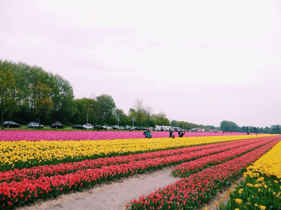 Viktoria Jean Li in Amsterdam, Keukenhof gardens