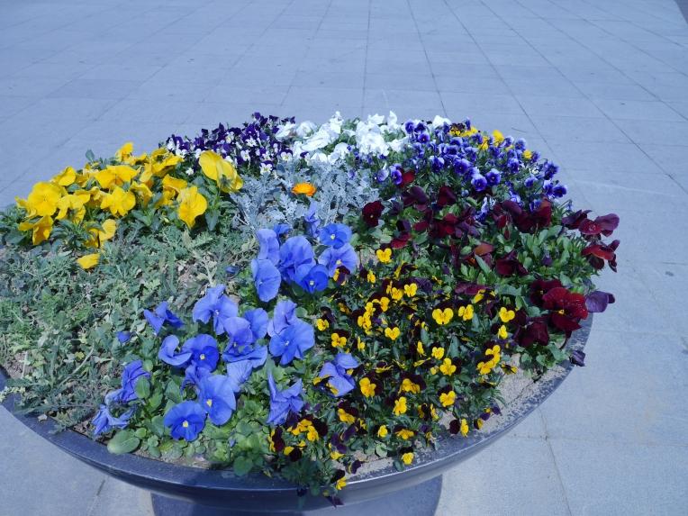 flowers at han river