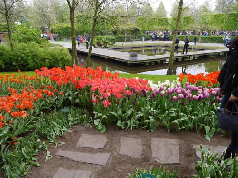 Keukenhof Spring Flowers 3