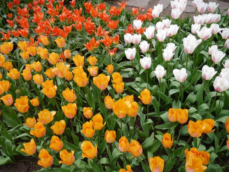 Keukenhof Spring Flowers 4