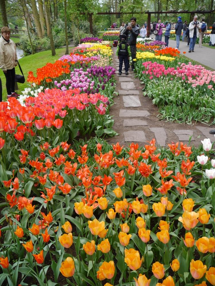 Keukenhof Spring Flowers 5