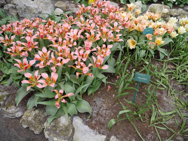 Keukenhof Spring Flowers 7