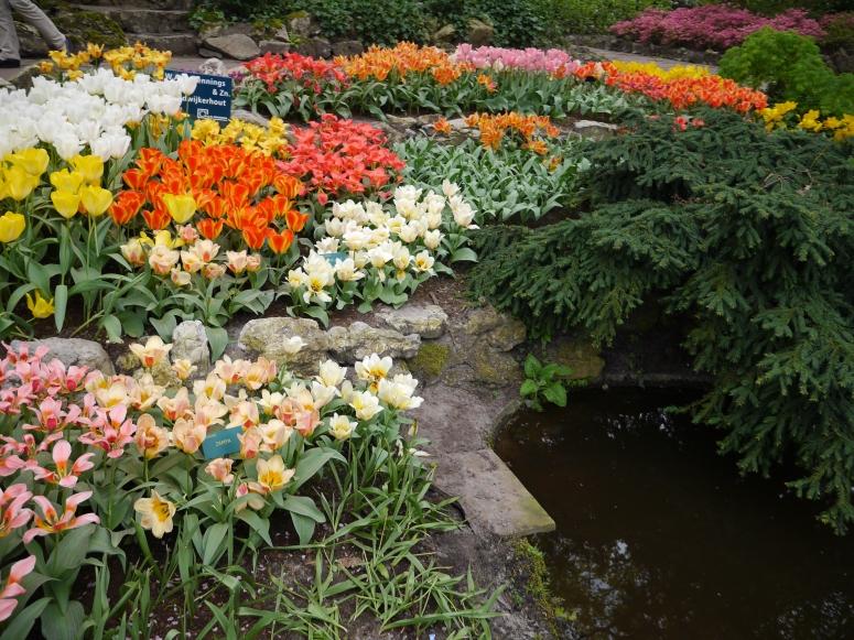 Keukenhof Spring Flowers 8