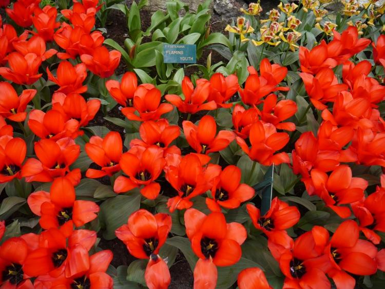 Keukenhof Spring Flowers 10