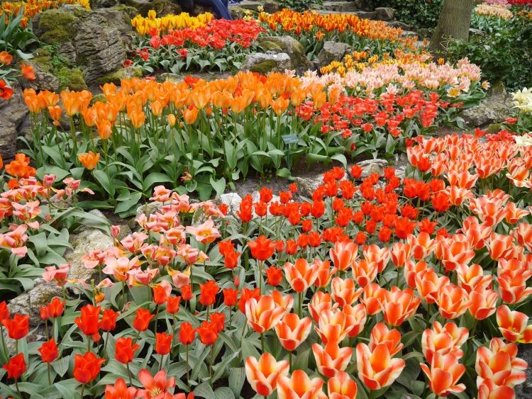 Keukenhof Spring Flowers 11