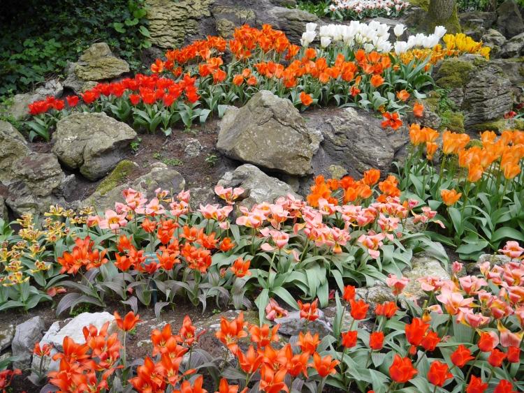 Keukenhof Spring Flowers 12