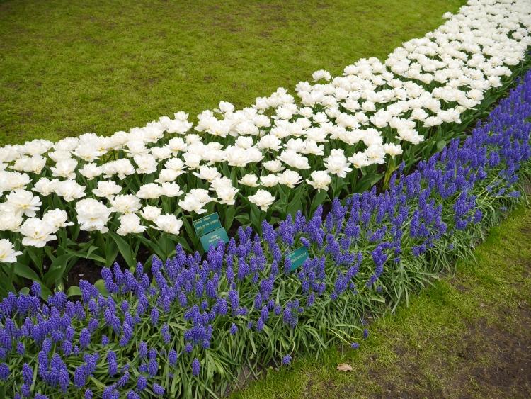 Keukenhof Spring Flowers 13