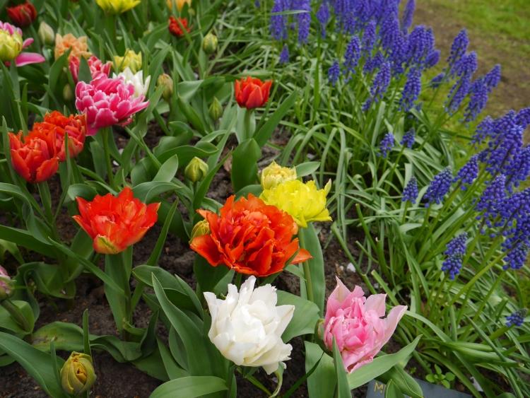 Keukenhof Spring Flowers 16