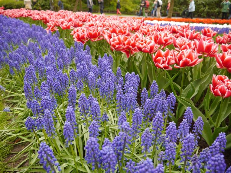Keukenhof Spring Flowers 18