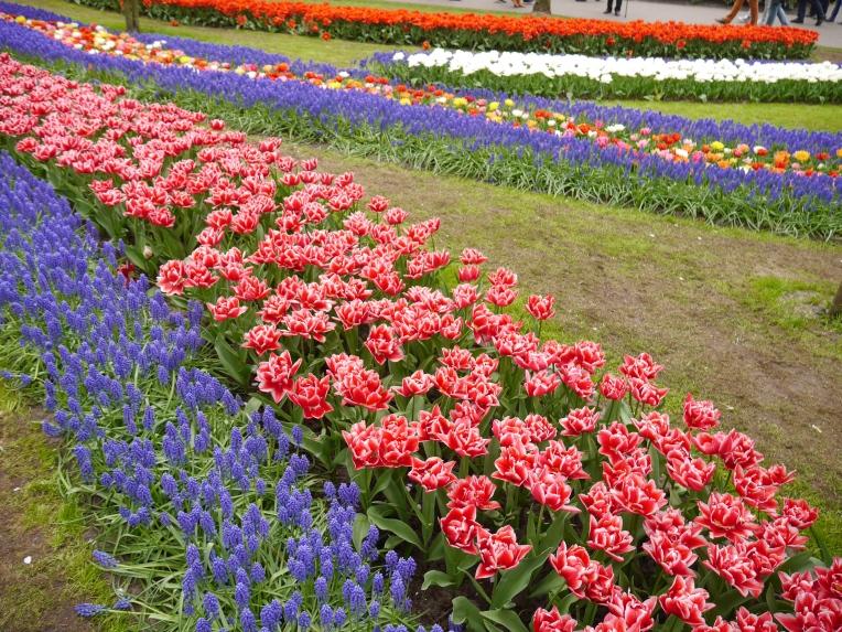 Keukenhof Spring Flowers 20