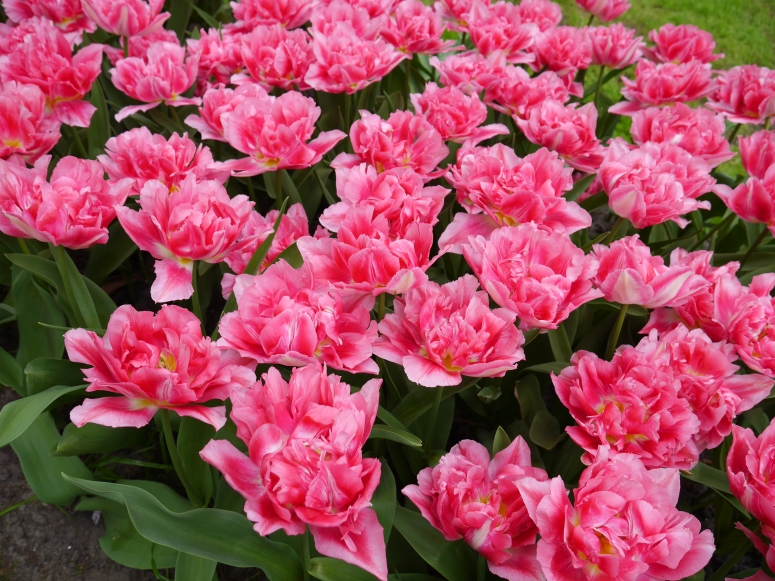 Keukenhof Spring Flowers 21