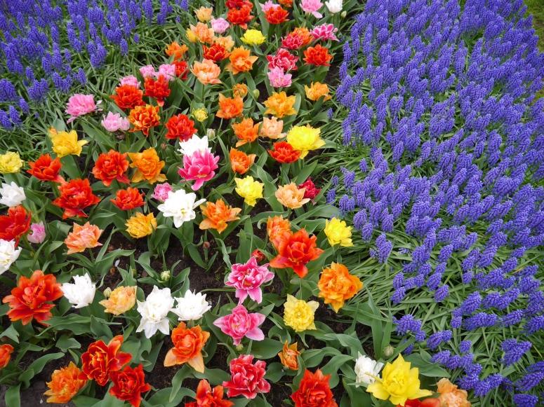 Holland Spring Flowers