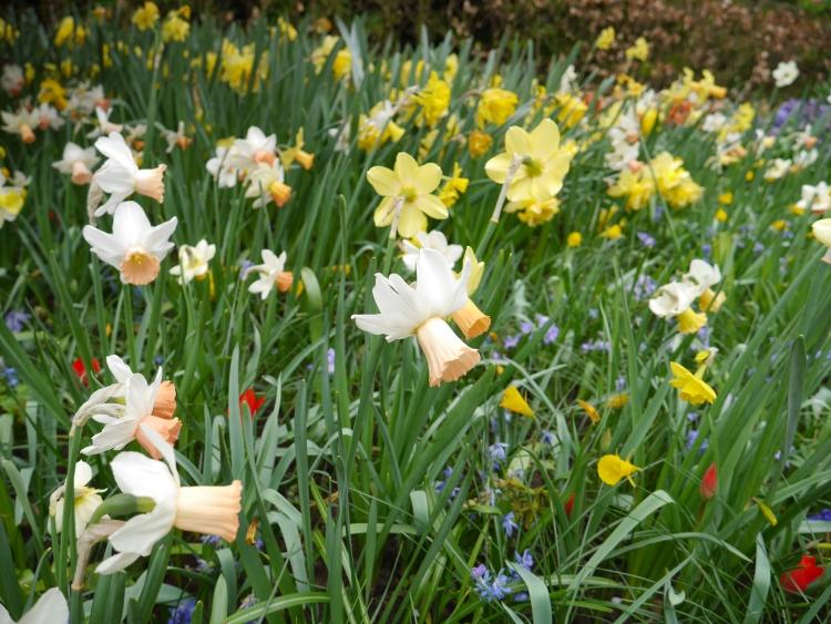 Keukenhof Spring Flowers 25