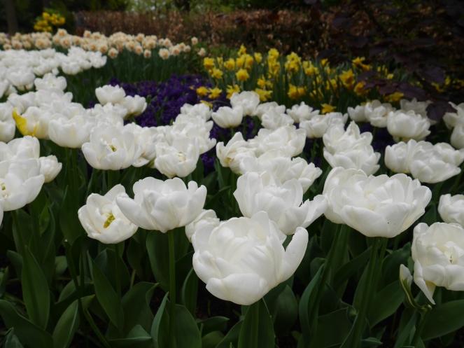 Keukenhof Spring Flowers 26