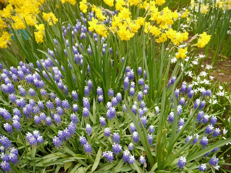 Europe Spring Flowers