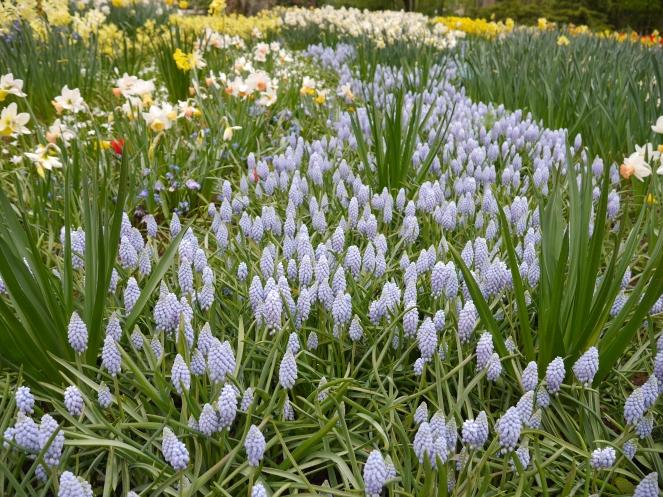 Keukenhof Spring Flowers Europe