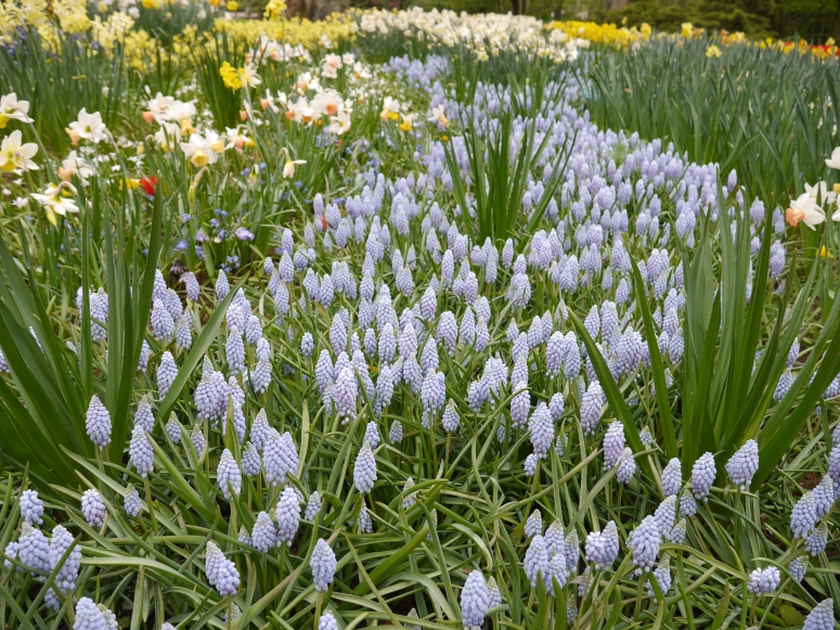 Keukenhof Spring Flowers Europe