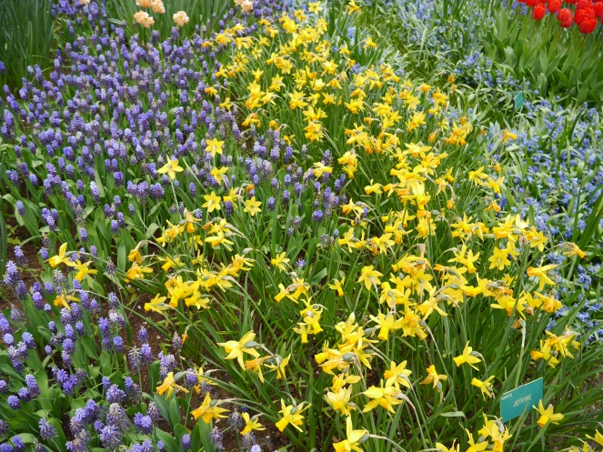 Holland Spring Flowers Amsterdam