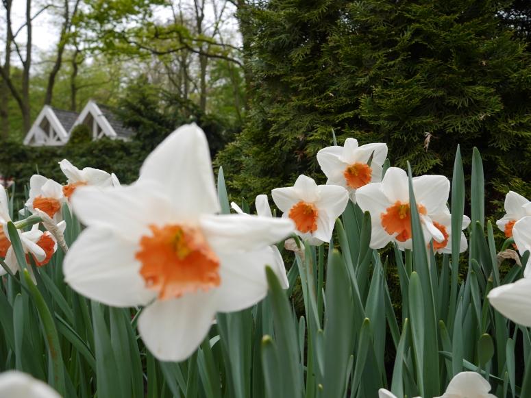 Keukenhof Spring Flowers 27