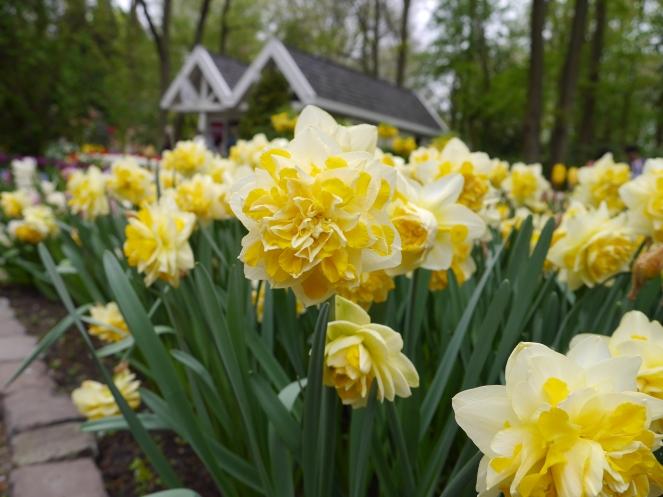 Keukenhof Spring Flowers 28