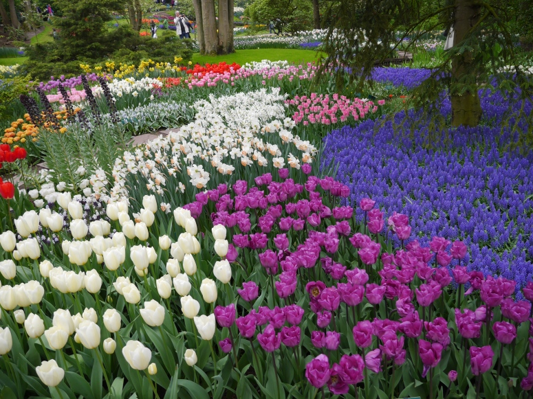 Tulip Garden Holland