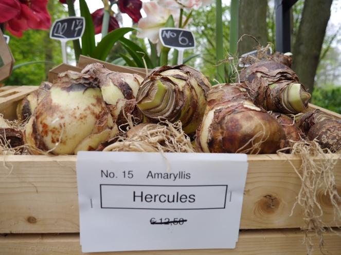 Hercules Plant