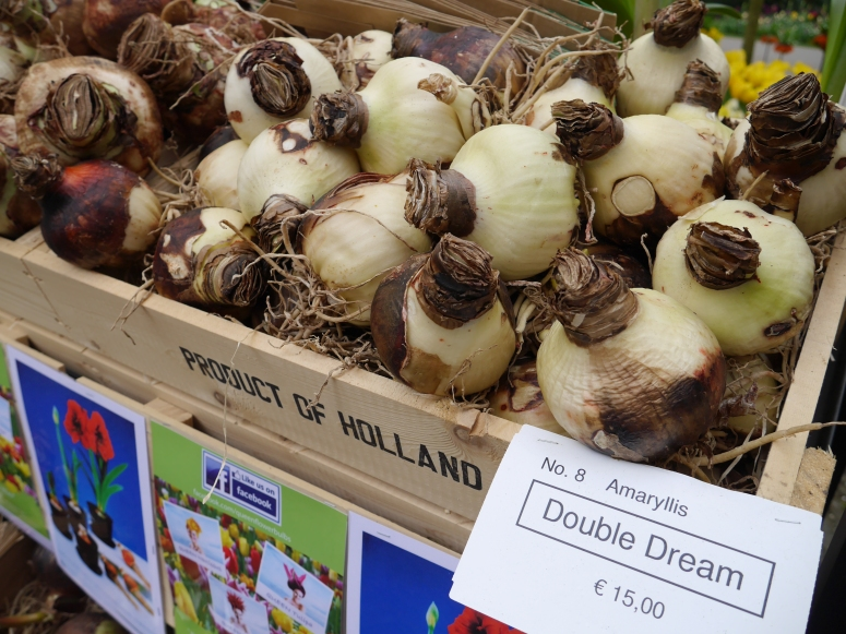 Bulbs from Netherlands