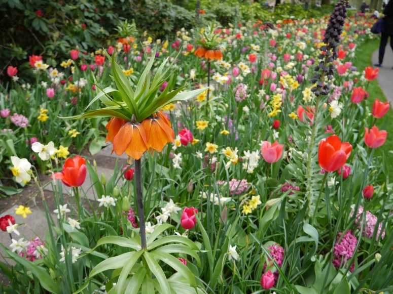 Holland Gardens
