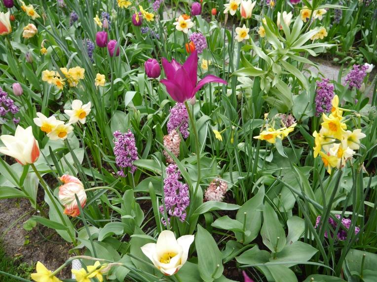 Flowers Netherlands Purple