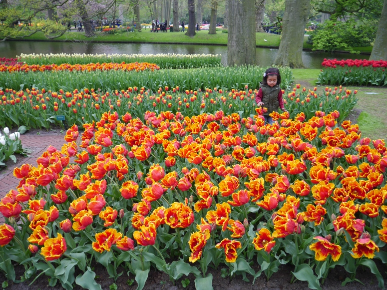 Little Girl and her Tulips