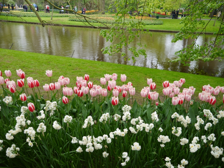 Lakeside Tulips