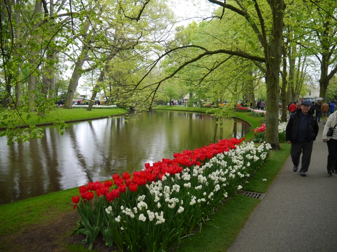 Lakeside Red Tulips