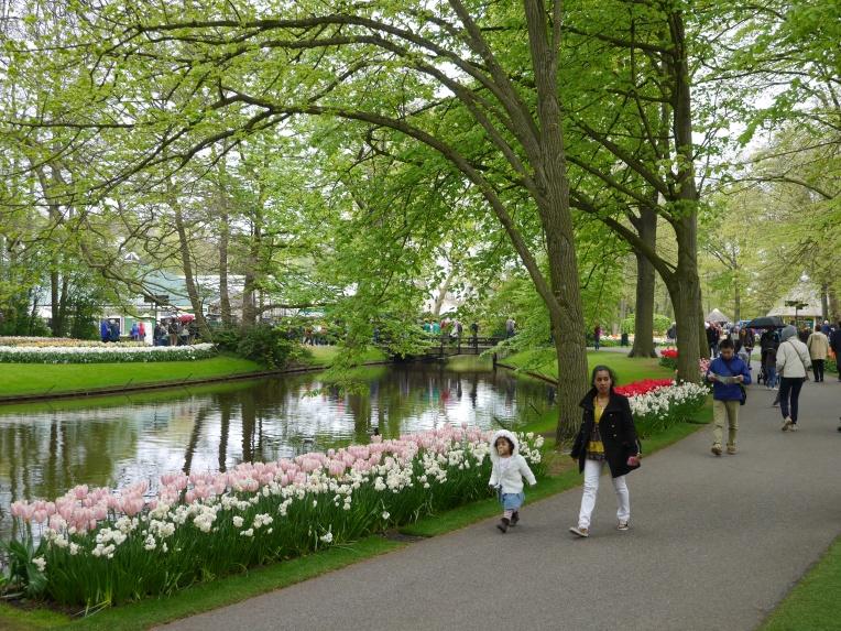 Lakeside Tulips