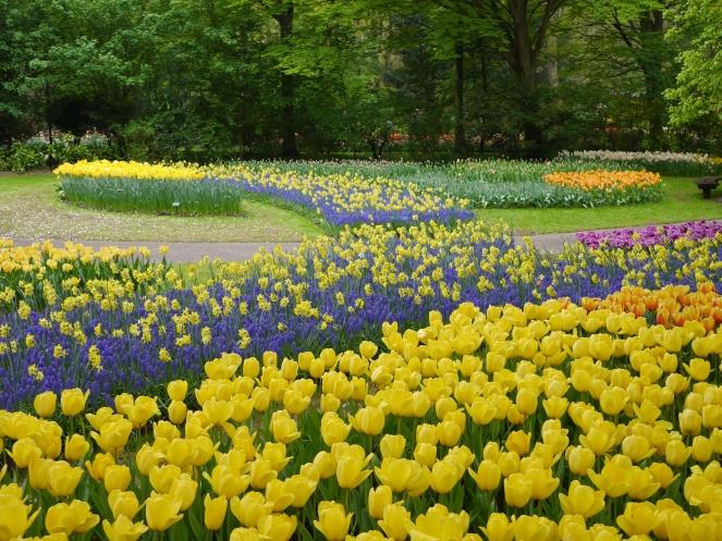 Tulips Garden Bloom