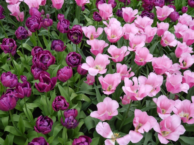 Pink and Purple Flowers