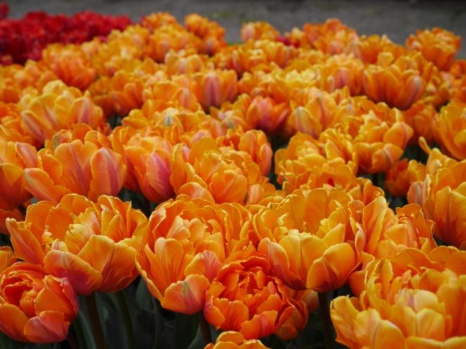 Orange Garden