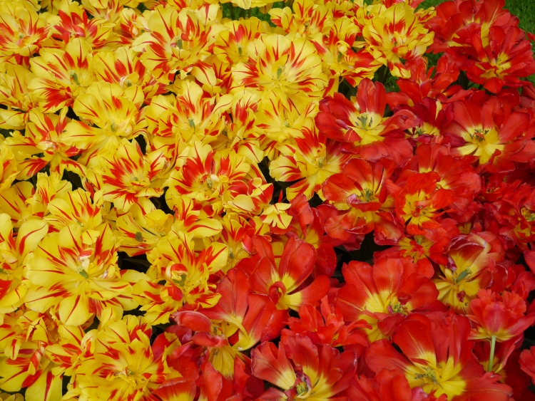 Yellow and Red Garden Flowers