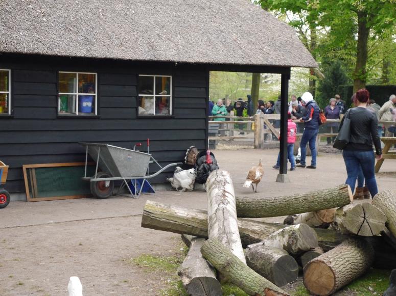 Keukenhof Petting Zoo