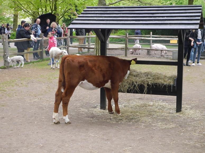 Keukenhof Horse