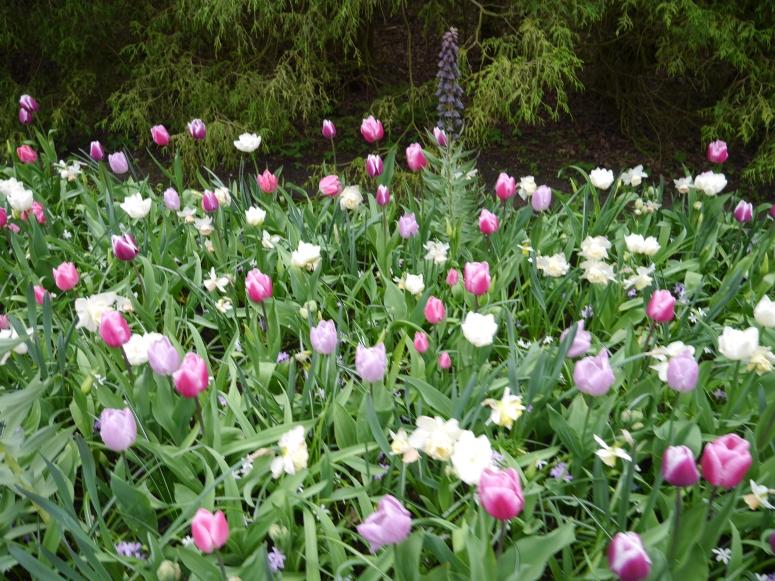 Spots of Flowers