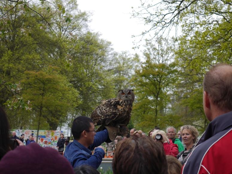 Owl Lisse