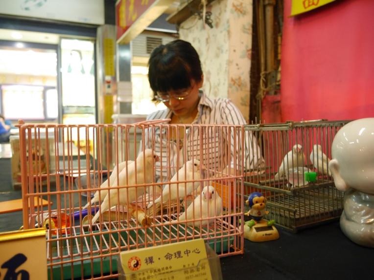 birds taiwan